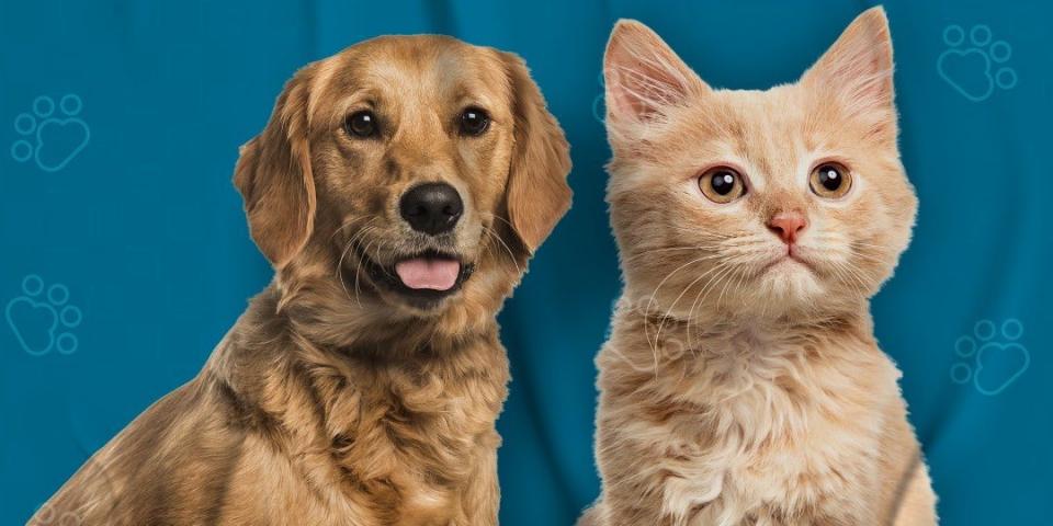 Prefeitura através da Secretaria de Saúde, realiza vacinação antirrábica em cães e gatos.